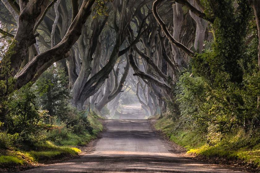irlanda-do-norte-dark-hedges